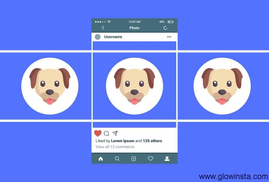 Five Ways To Make Your Dog Famous On Instagram
